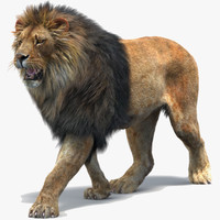 max lion 2 fur cat