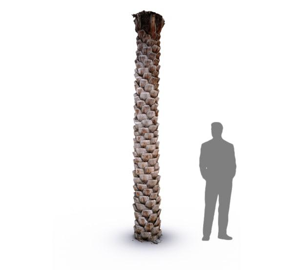 scan date palm tree trunk 3d model