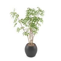 realistic plant 3d max