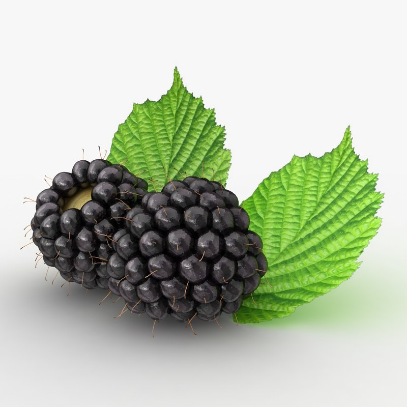 3d realistic blackberry