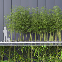 Bamboo Trees 4 (+GrowFX)
