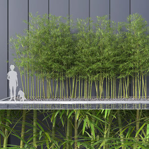 bamboo trees 4 3d max