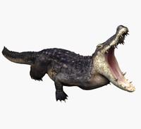 3d model alligator cayman crocodile