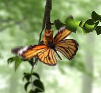 3d butterfly broken chrysalis animation
