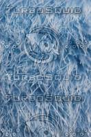 Blue fur texture