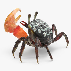 3d model of fiddler crab rigged