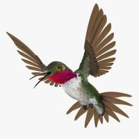 Broad Tailed Hummingbird Rigged