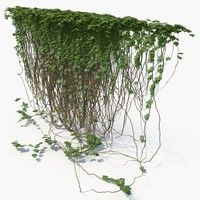 3d model realistic ivy wall