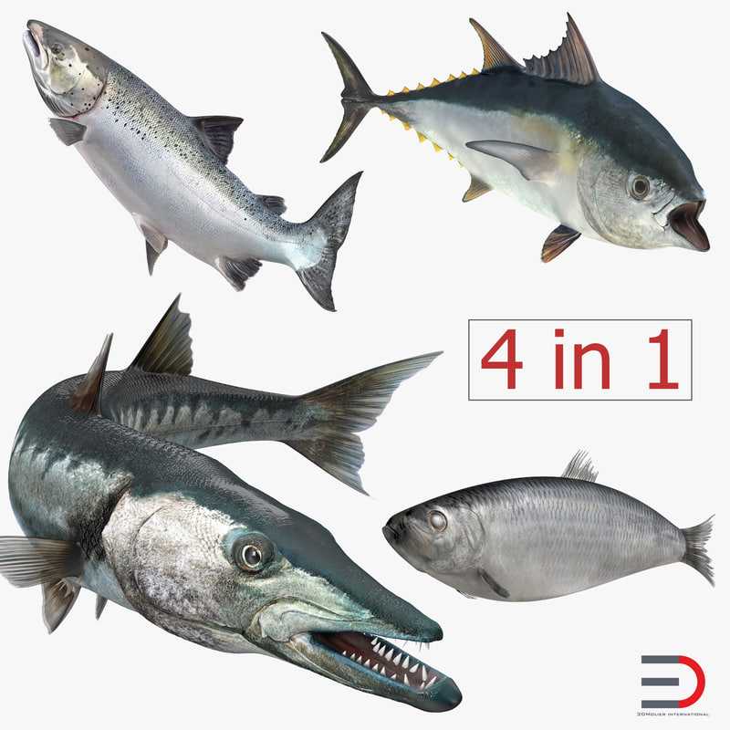 fishes 2 rigged salmon 3d max