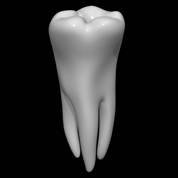 3d model tooth molar