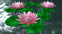 nelumbo pond 3d model