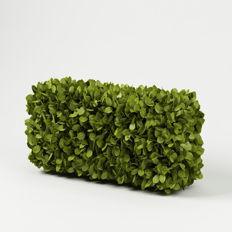 bush plant hedge 3d model