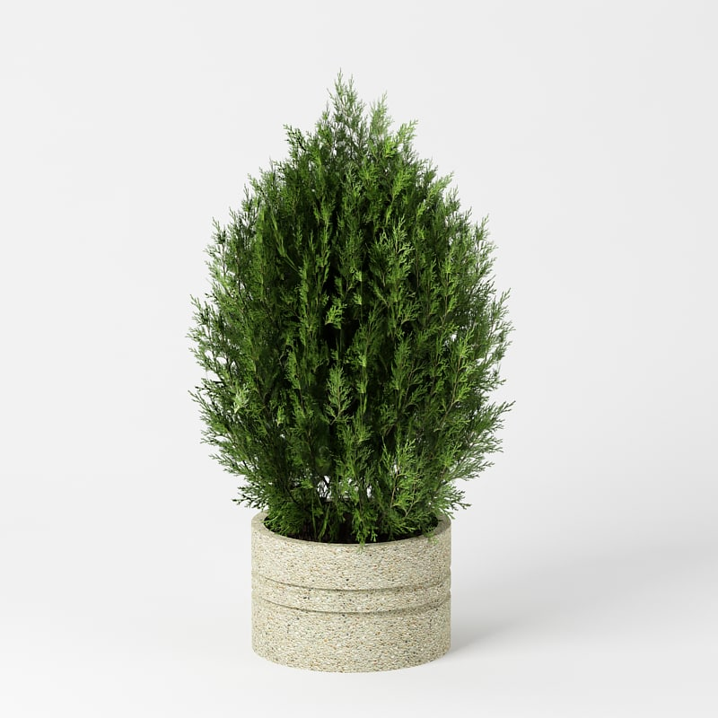 3d fir tree bush plant model