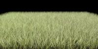 dynamic grasses 3d model