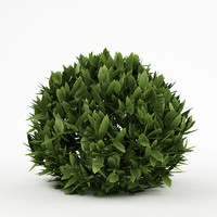 3d plant bush