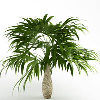 3d bush palmetto palm model