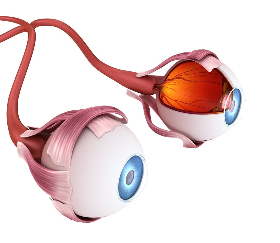 3d eye anatomy