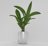 3d indoor plant model