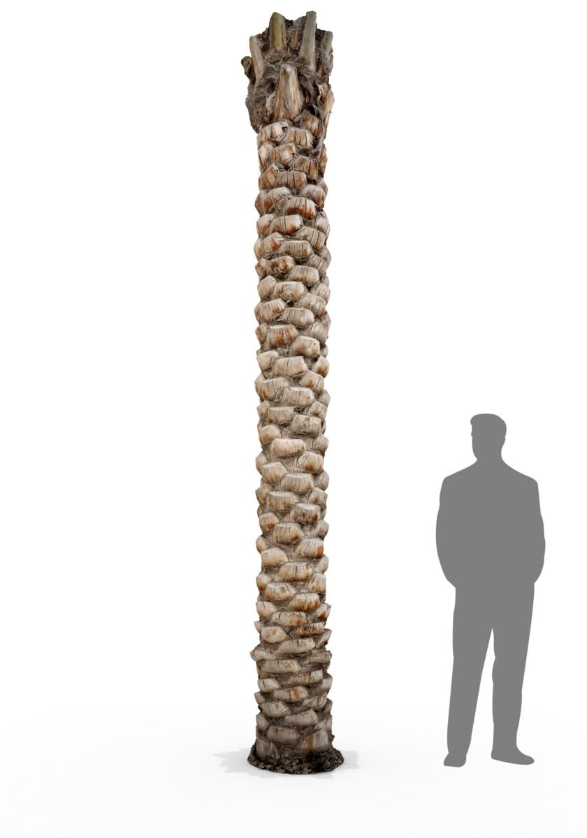 scan date palm tree 3d model