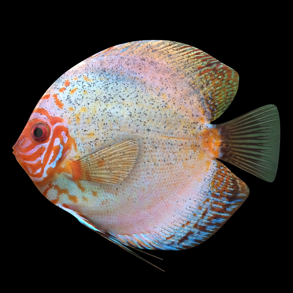 3ds discus fish