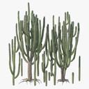 Succulent 3D models