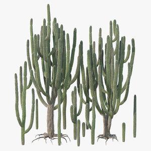 subpilocereus repandus tropical 3D model