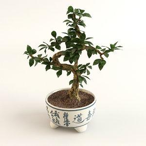3D bonsai