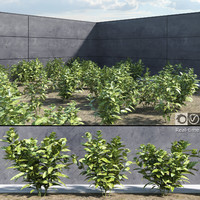 3d model of ready japanese laurel plants