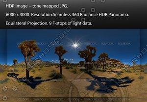 JOSHUA TREE GROVE , 360 PANORAMA #573