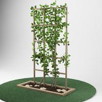 plant_garden_pergola_05