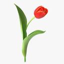 tulip 3D models