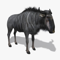 wildebeest fur 3d model