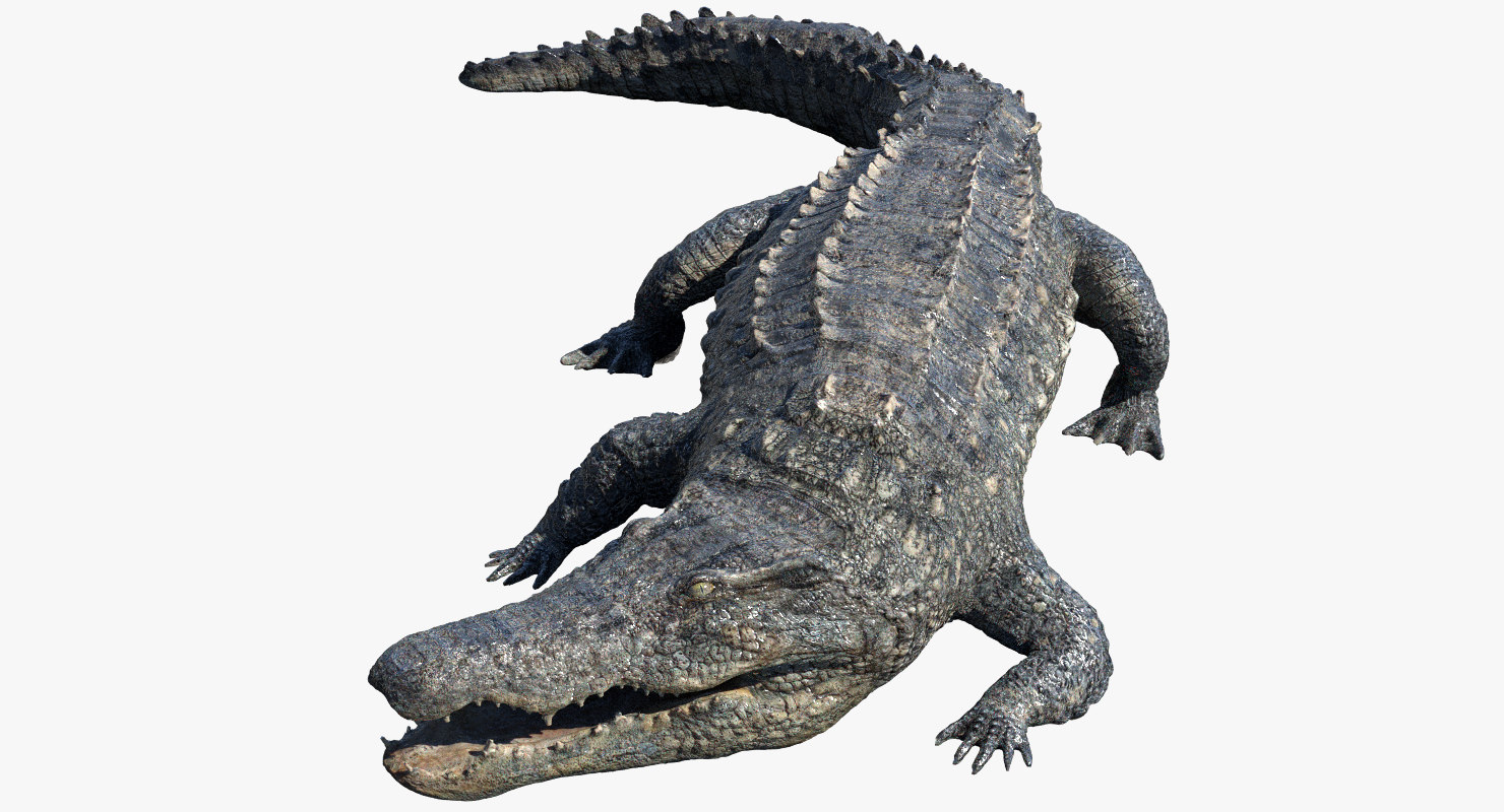 realistic crocodile rigged 3d model