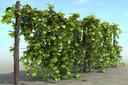 Vineyard Pack
