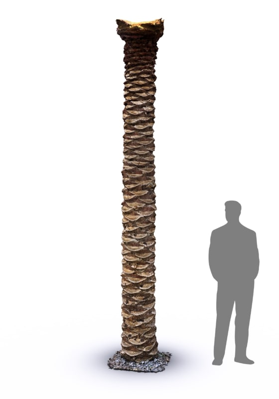 3d max scan date palm tree trunk