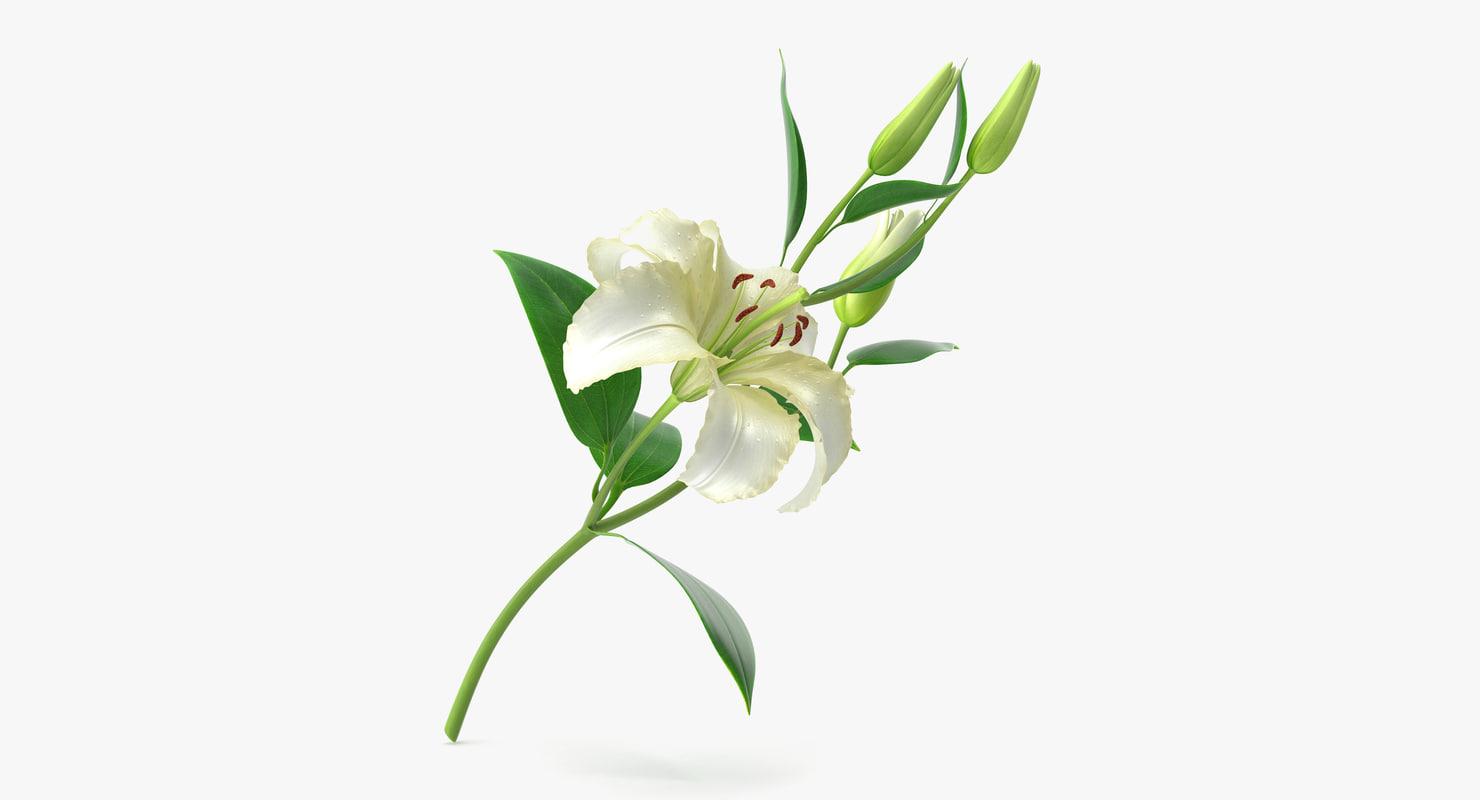 3d model of lily modeled petal