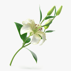 3d model of lily modeled petal