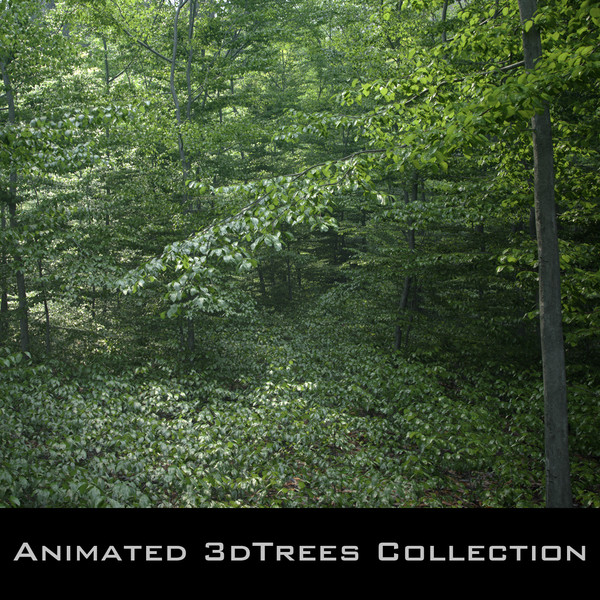 beech tree animation 3D model