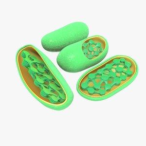 chloroplast 3d obj