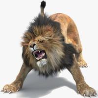 lion 2 fur cat max
