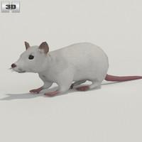 3D rat white