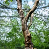3d tree 2