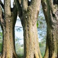 tree asset 3d obj
