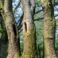 3d tree asset model
