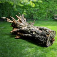 Realistic Tree Roots Model 6