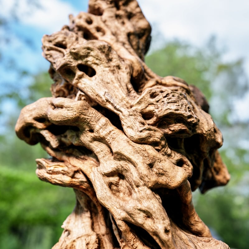 obj olive tree base trunk