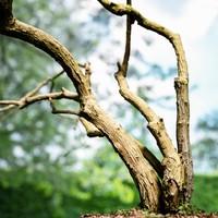 Tree Environment Asset 1