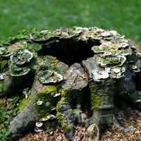 Shroom covered tree stump 3D scanned