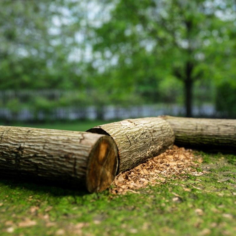 scanned treetrunk landscape 3d obj
