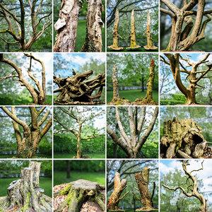 obj forest environment